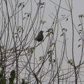 2008 11 28 Un oiseau