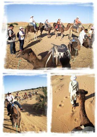 Crop Sahara 2