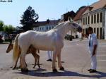 Selene du Quesnot et sa pouliche, Fleur d'Ouve - 21 Juin 2014 - Concours d'élevage local - Hucqueliers