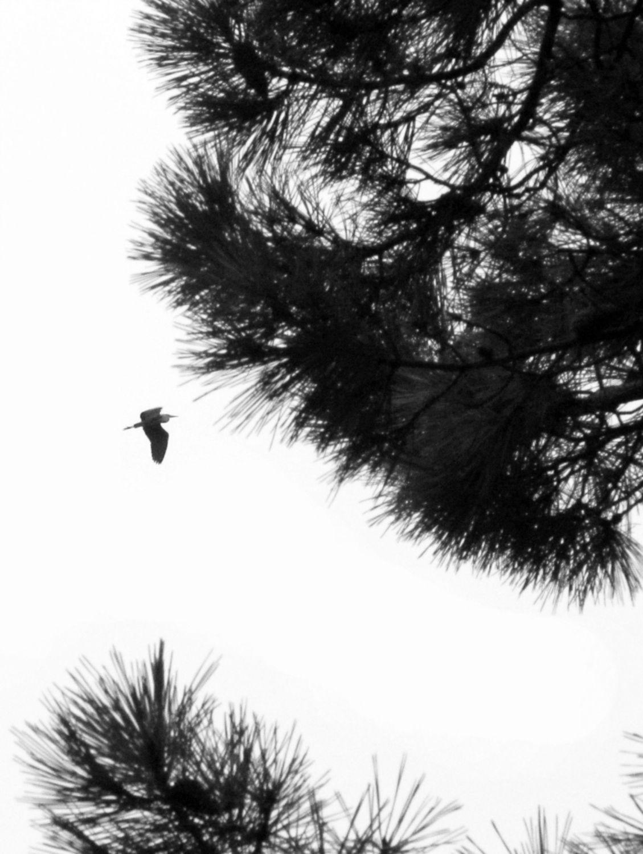 Oiseaux ile de re foto Mo2 (67)-h1500