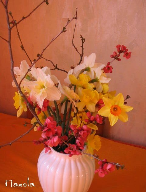 premières fleurs ...