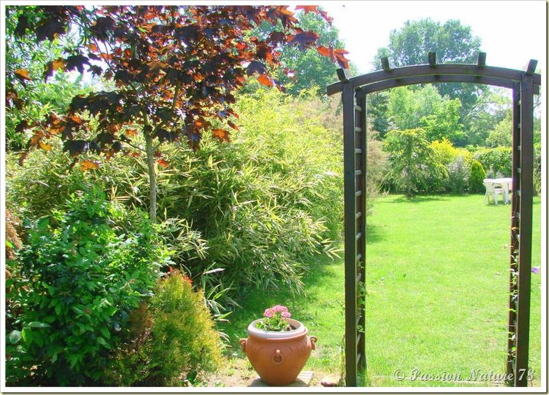 Petite promenade dans notre jardin (5)