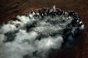 الصورة3 الأرض كما لم تراها من قبل شبكة الصين
