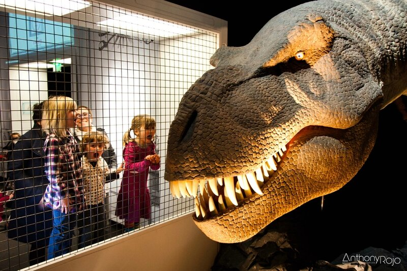 cap_sciences_t-rex_©_Anthony_Rojo-32 copie