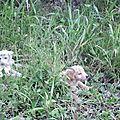 4 chiots abandonnés ds la forêt 1