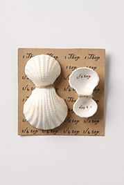 shell_spoons
