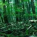 L'aokigahara, la forêt effrayante vous souhaite un joyeux halloween