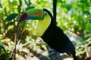 costa-rica-FB-300x200
