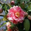 Il n'y a pas d'exception : toute plante a ses fleurs.