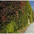 Couleur d'automne au jardin public (bordeaux) (2)