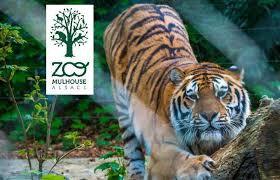 une-sortie-au-parc-zoologique-de-mulhouse