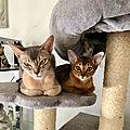 Cocteau et les chats: