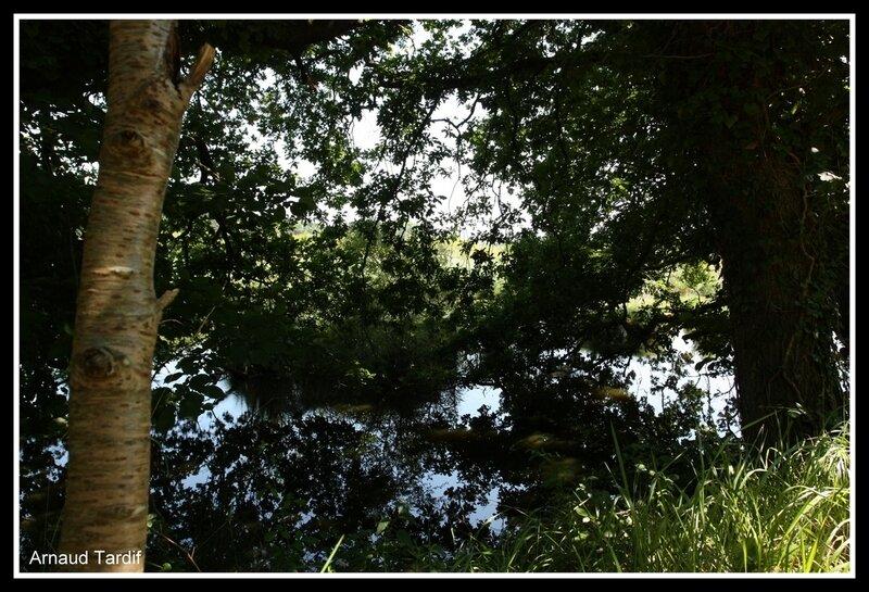 0066 Guidel - Les rives de l'Etang de Lannénec à Locmiquel-Méné