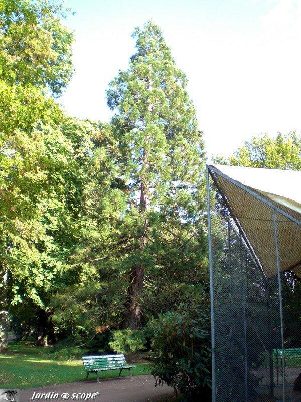 Le banc au séquoia au Parc Floral d'Orléans la Source