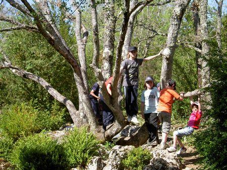 arbre_nebias