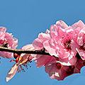 Le printemps et vivaldi