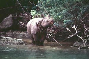 IUCN 01