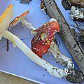 Amanita muscaria (3)
