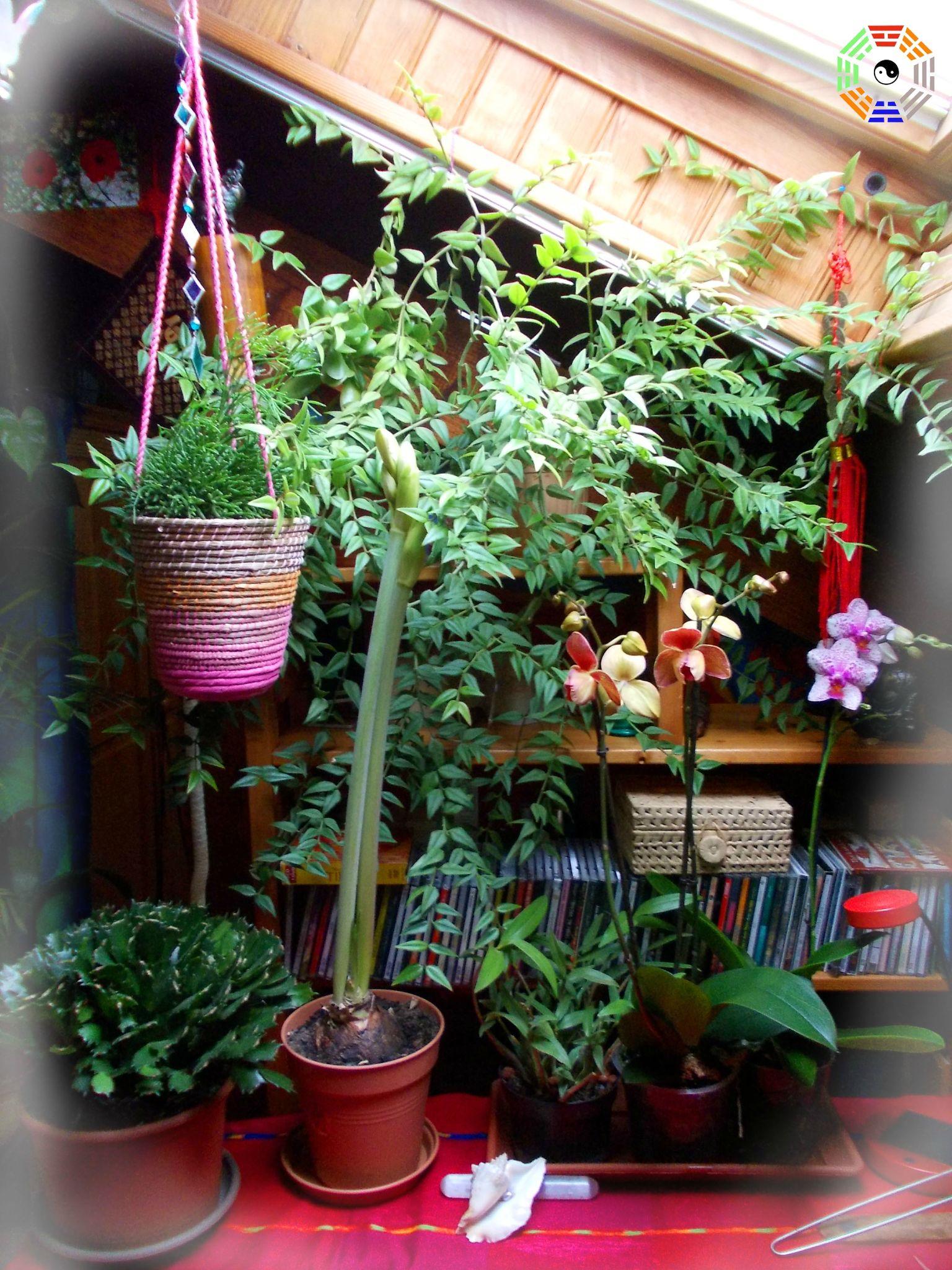 les plantes la maison une histoire de sant et de bien tre plantes paysage et feng shui. Black Bedroom Furniture Sets. Home Design Ideas