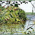 Lac 01091521
