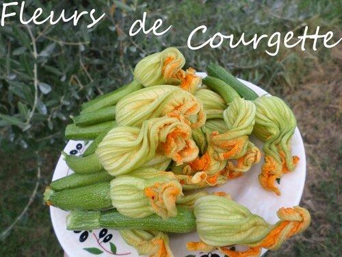 fleurs-courgette