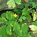 Jardin sauvage St Vincent (9)