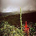 flore de la Souffrière