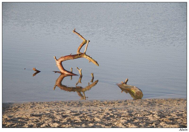 à défaut d'un squelette de dromadaire dans le sable...un bout de bois pourrissant dans l'eau