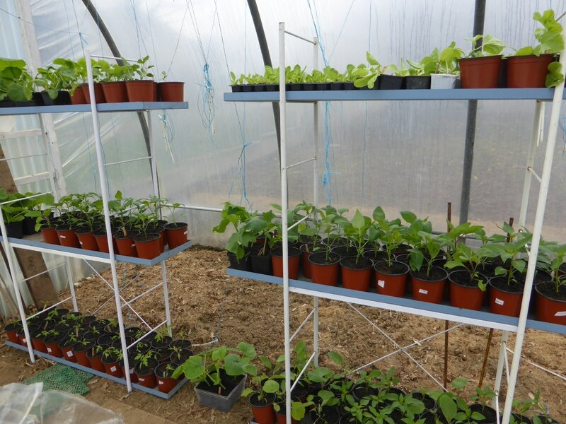 2-plants semis (13)