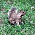 Caisse d'épargne l'écureuil (3)