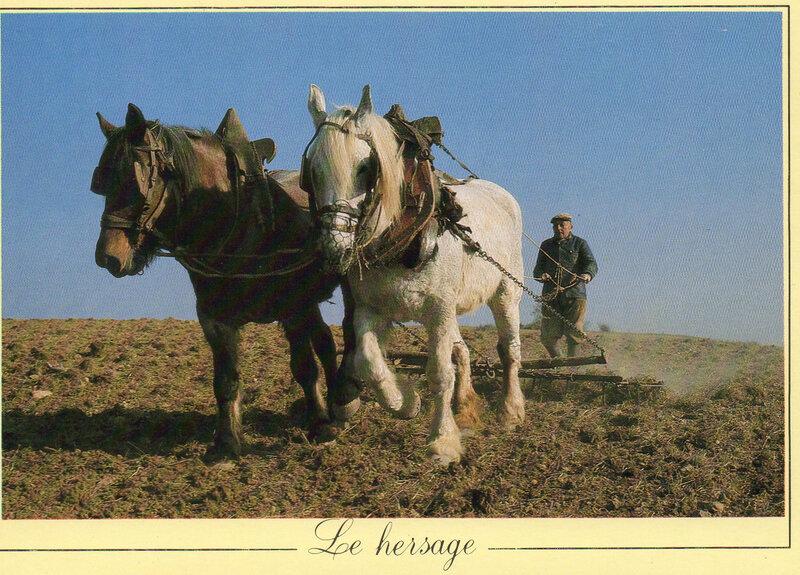 Hersage