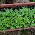 Petits légumes en jardinière