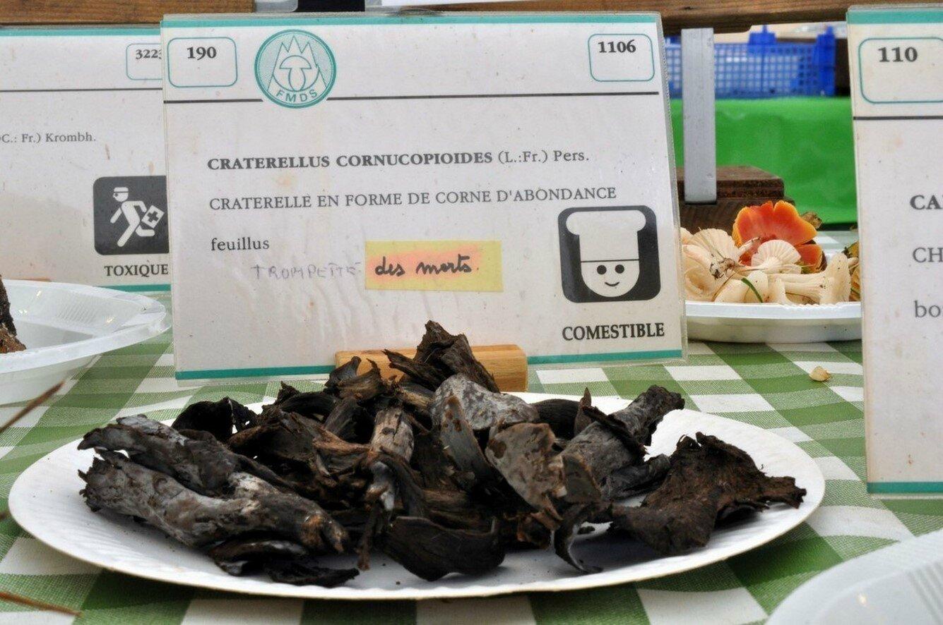 Craterellus cornucopioides