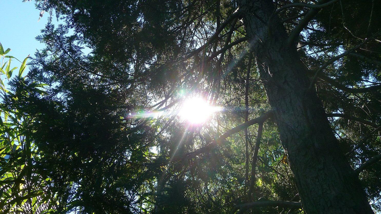 Le soleil au travers des sapins