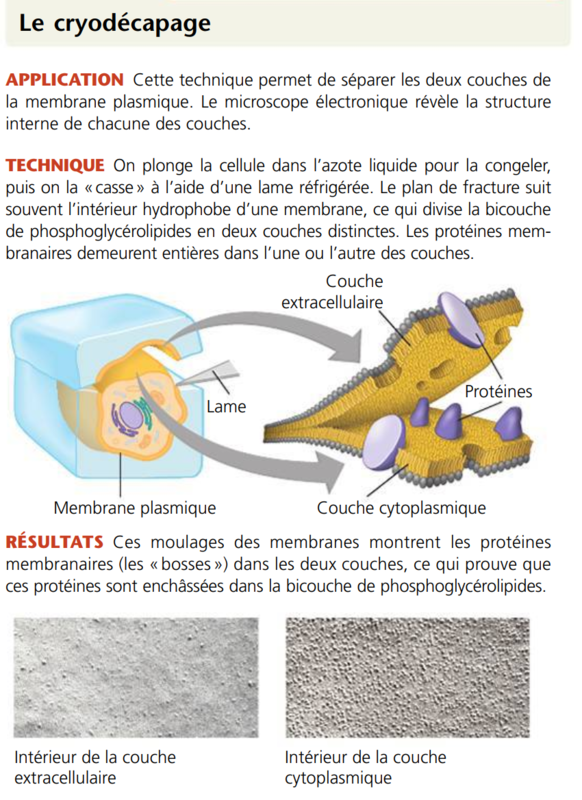Cryodécapage