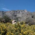 aux pieds de la Table Mountain