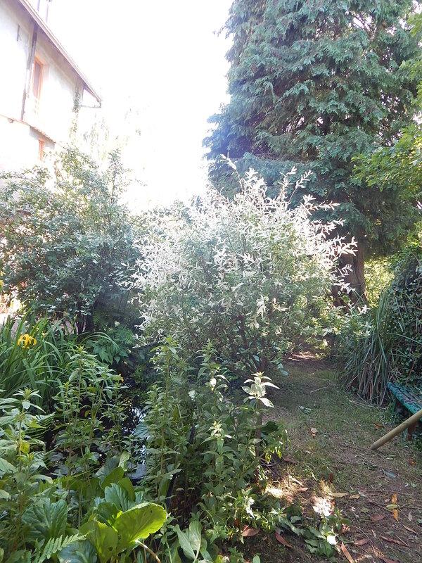 jardin_007