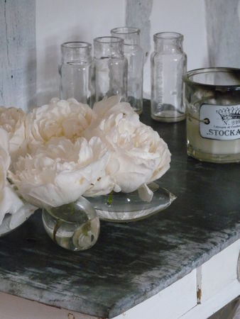roses_anglaise_007