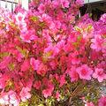 fleurs pierrette 2