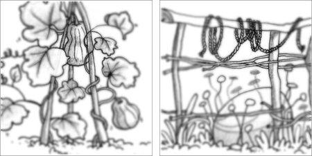 compo jardin 3
