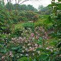 La Roseraie de Morailles le 11 mai 2010…froid et pluvieux