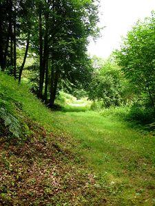 chemin_dans_les_bois_La_Cellette