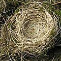 Enfin un nid ?