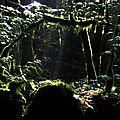 Jungle (2)