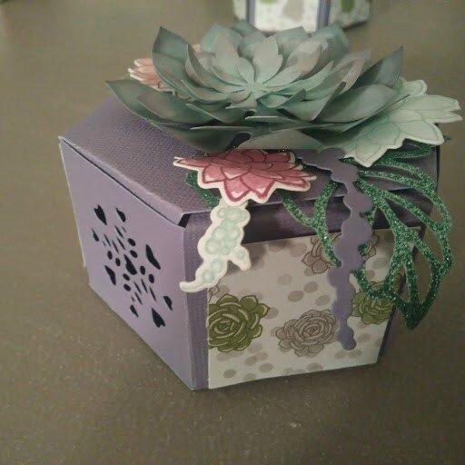 boîte succulente 2