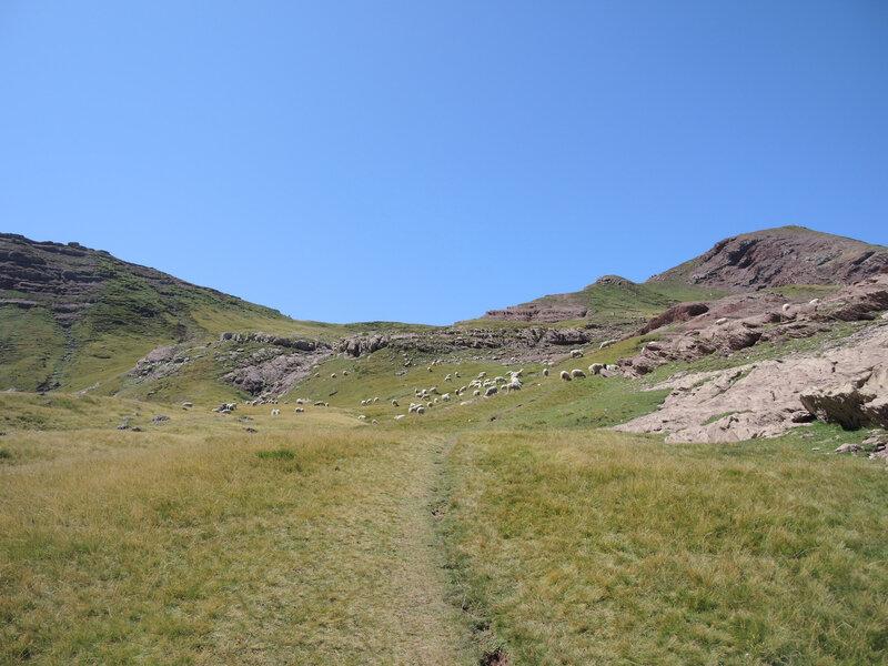 K) Lac d'Arlet, sentier pour le pic d'Aillary et brebis (64)