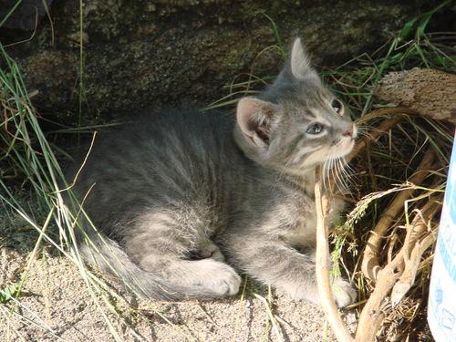 2008 06 30 Un chaton au soleil