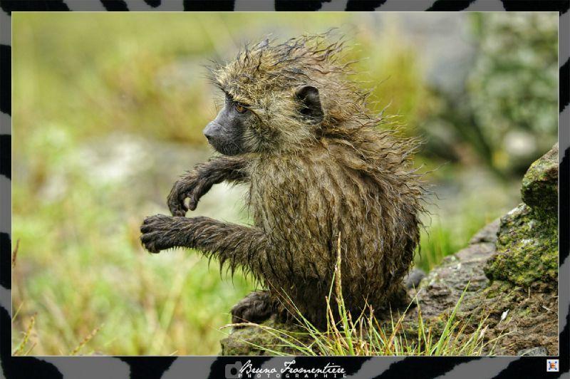 Monkeys 4 mini