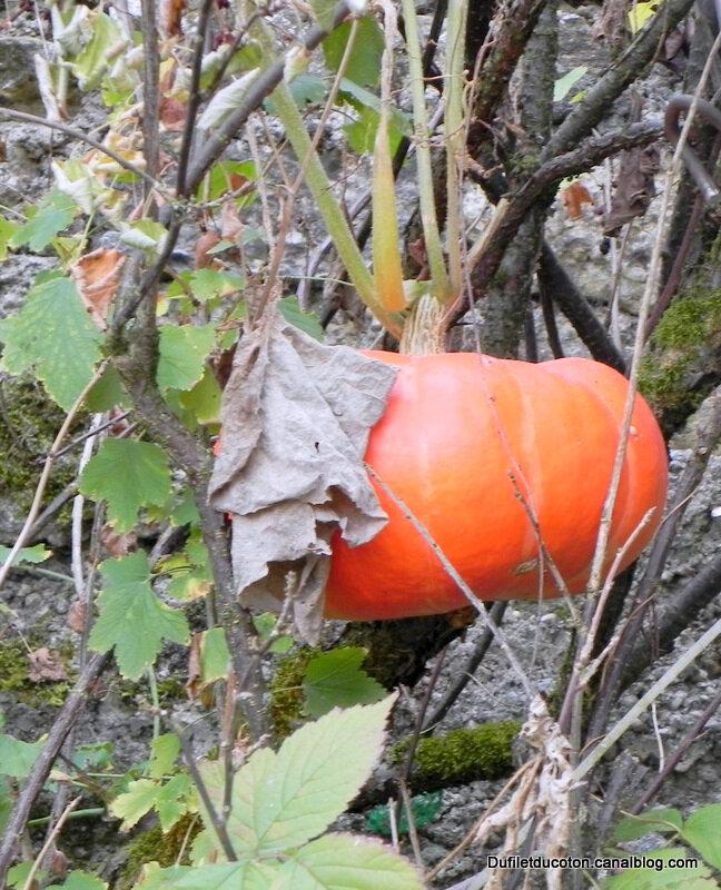 citrouille nuisette halloween