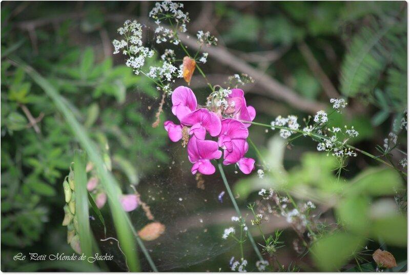 Fleurs mauves 2